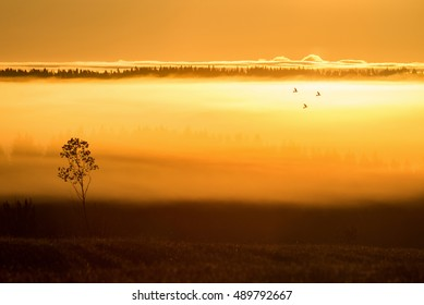 Sun rises and three birds flying in misty landscape