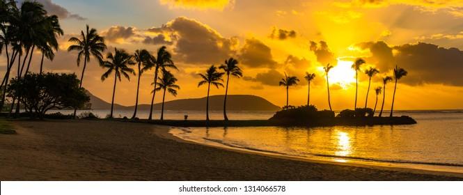 sun rising amidst a row of palm trees above a calm tropical Hawaiian island sandy beach