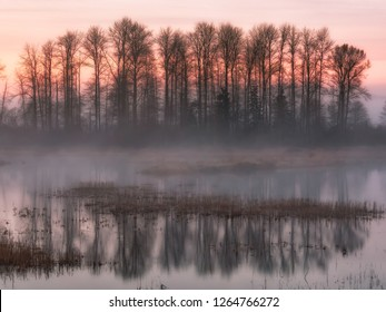 The sun rising behind some trees over the foggy marsh