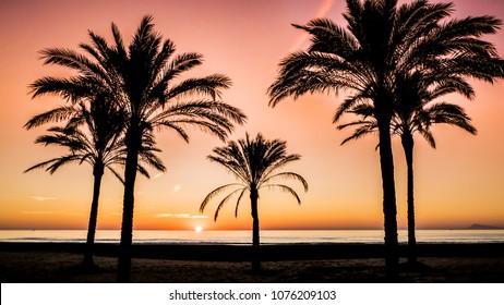 Sun rising between palm trees in a beach town of Cullera, Valencia region, Spain.