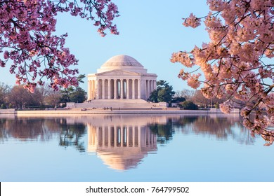 Sun rising illuminates the Jefferson Memorial and Tidal Basin. The bright pink cherry blossoms frame the monument in Washington DC during the annual cherry blossom festival