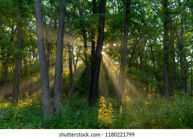 Sun Rising in Mac Queen Forest Preserve
