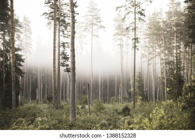 sun rising in mist covered forest. sun rays in fog with low visibility - vintage retro look