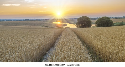 The sun rising over the field of mature cereal