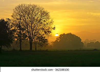 The sun rising over the silhouette trees. Nature composition.