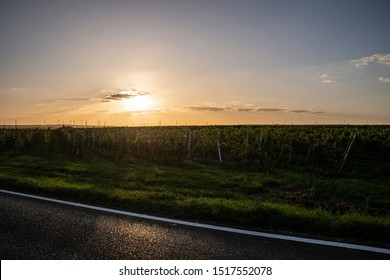 Sun set at the back drop of vineyard