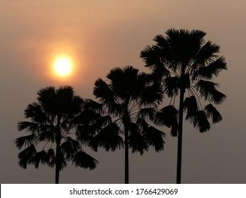 Sun set on top the tree