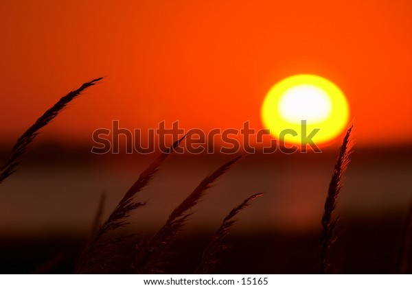 The sun sets above tall marsh grass at Quivira National Wildlife Refuge