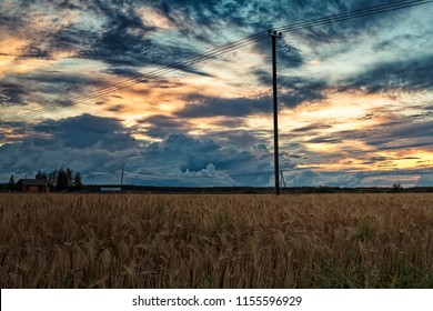 The sun sets beautifully behind the telephone lines crossing the barley fields of the Northern Finland. The crop is almost ready for harvesting.