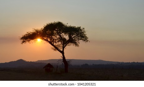 The sun sets behind a lone acacia tree, next to an African hut, in Zimbabwe