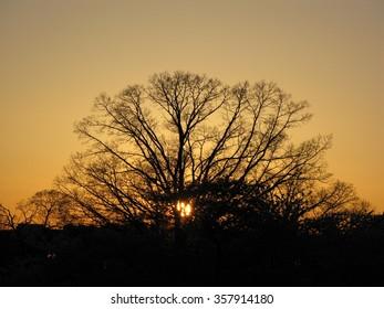 Sun Sets Behind a Tree