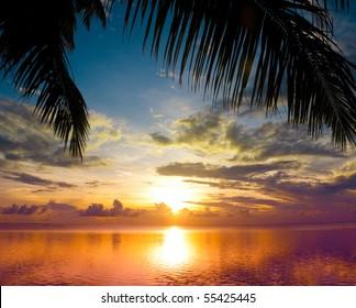 Sun sets between Palms