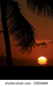The sun sets on the island of Oahu, Hawaii against a palm tree.