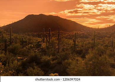 Sun sets over Arizona desert landscape near Phoenix ,Az,USA