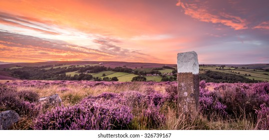 The sun sets over blooming heather in the North Yorkshire Moors National Park.