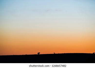 Sun Setting Behind Silhouette Of haloxylon ammondendron Tree