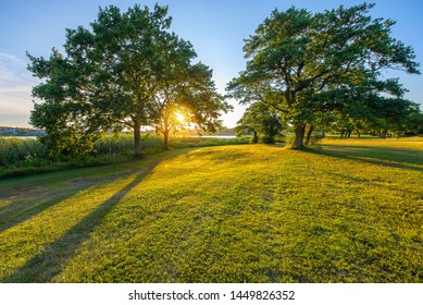 The sun setting behind some trees, Jutland, Denmark