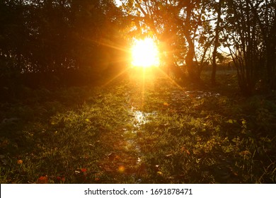 The sun is setting and dawn is breaking. Water flows through the grass. The sun shines through the trees