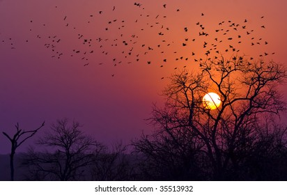 sun setting in kruger national park south africa