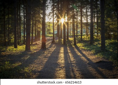 The sun is setting late on a summers evening in the Swedish forrest