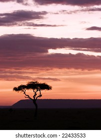 Sun setting in masai mara with acacia on foreground