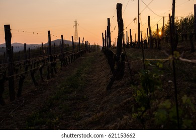 Sun setting on a vineyard in Piemonte, Italy.