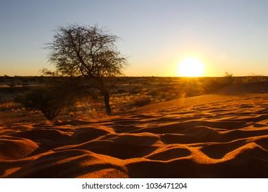 The sun setting over the kalahari desert in Namibia.