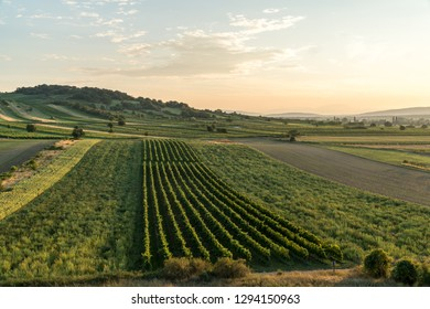 The sun is setting over a vineyard near Eisenstadt in Burgenland, Austria