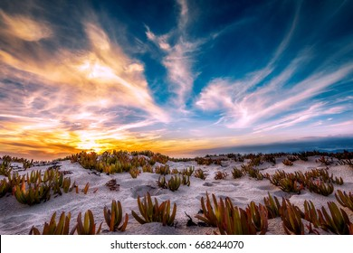 Sun setting in Playa Del Rey with dramatic clouds sweeping through the sky.  Coastal plants and crisp white sand dunes bring life to the beautiful foreground.