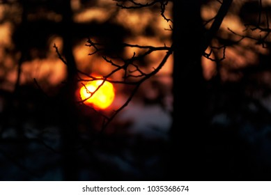 The sun setting through tree branches