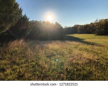 Sun shine green meadow