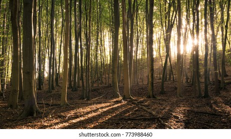 The sun shines into a beech forest at the Island of Ruegen in Germany