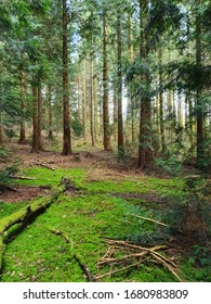 The sun shines through an almost impossibly green forest scene - in the foreground, dazzling moss covers the floor and fallen branches while in the background, blue sky and sunshine dance between the