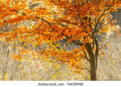The sun shines through autumn leaves.