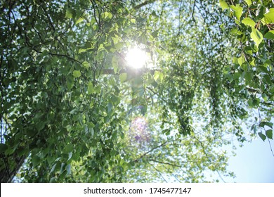 The sun shines through branches and leaves.