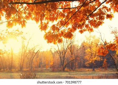 The sun shines through the branches of trees in the autumn forest