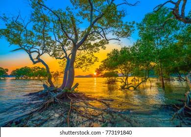 The sun shines through the mangrove trees the roots of the mangrove  sea erosion mangrove tree