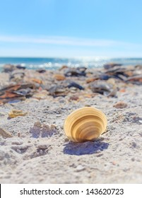 The sun shines through a pale cockle shell left on the beach of Sanibel Island, Florida, USA.  The Gulf of Mexico glows blue in the background.
