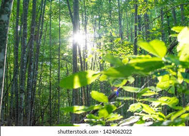 Sun shines through a thick forest covering illuminated small vegitation below.