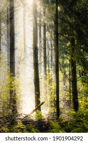 The sun shines through the trees in an autumn forest