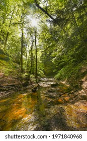 The sun shines through the trees onto the stream flowing through a ravine in Shades State Park