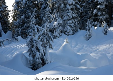sun shines through trees at the peak of a snowy mountain in Canada