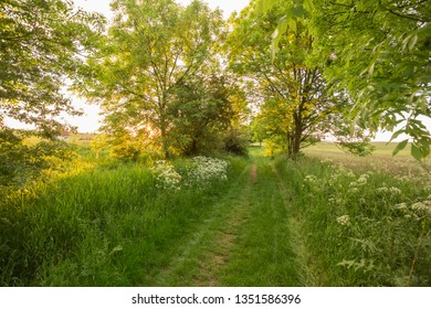 The sun shines through the trees, spring path.