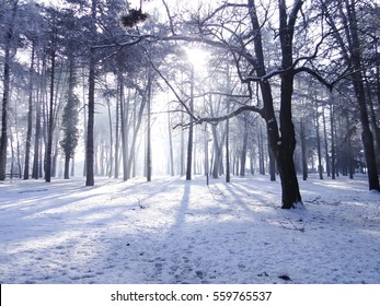 Sun shines thru the woods