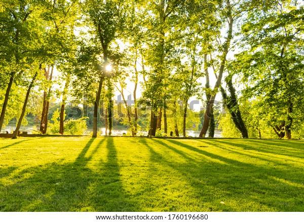 sun-shinig-through-trees-creating-600w-1