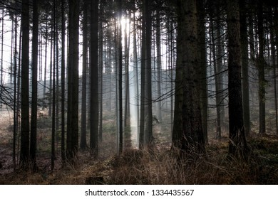 the sun shining between the trees in the forest