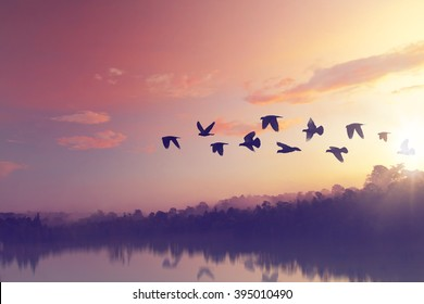 Sun shining and birds silhouettes flying sunset sky  go home