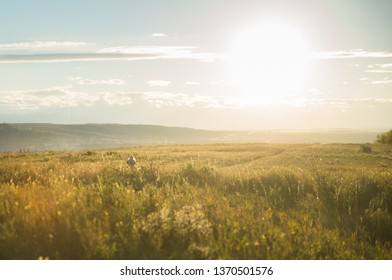 The sun shining brightly over a field where a woman walks along a footpath