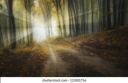 sun shining in forest in autumn