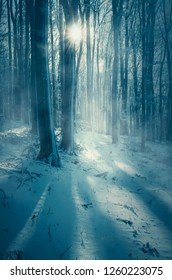 sun shining in frozen woods on winter morning
